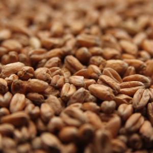 Oak Smoked Wheat Malt-0