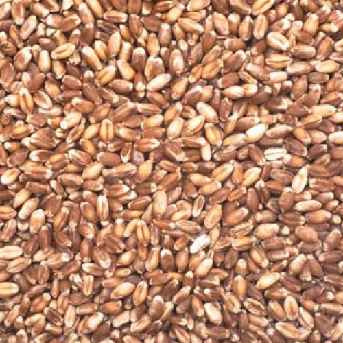Raw Unmalted Wheat-0