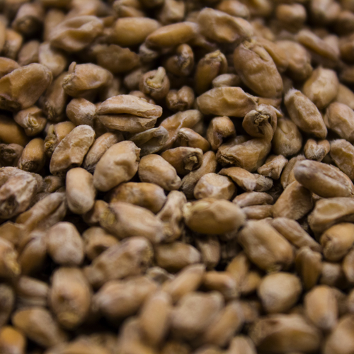 Wheat Malt-0